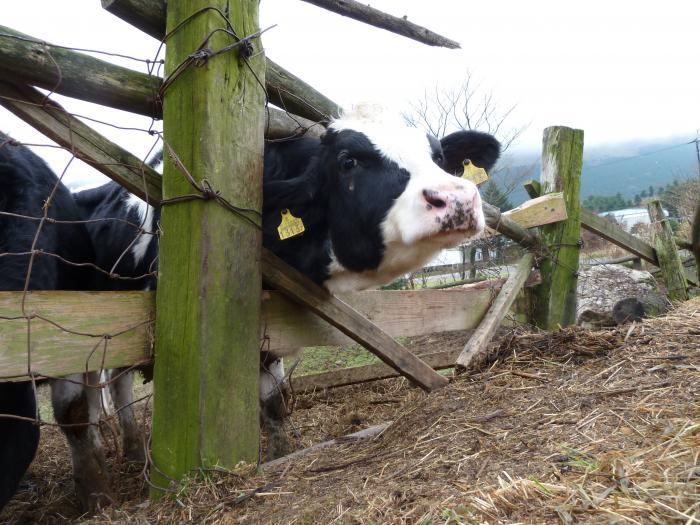 牛達3縮小