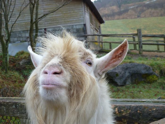 大羊5縮小