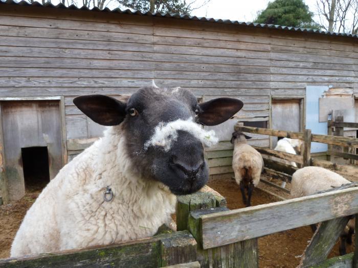 黒羊2縮小