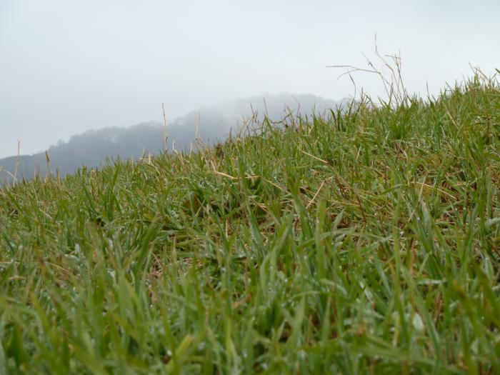 大野ヶ原牧草2縮小
