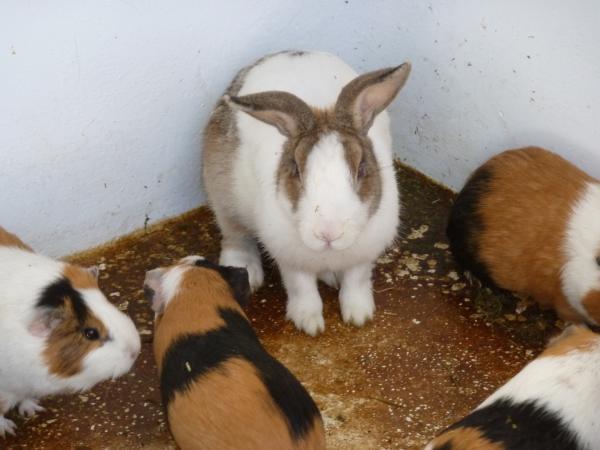 ウサギ1縮小