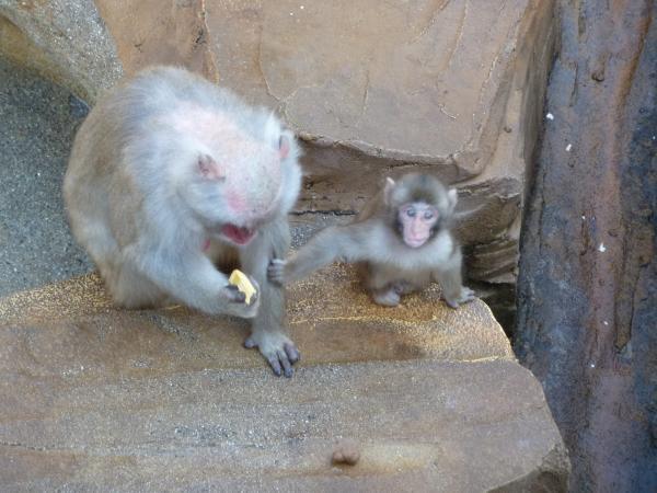 サル親子縮小