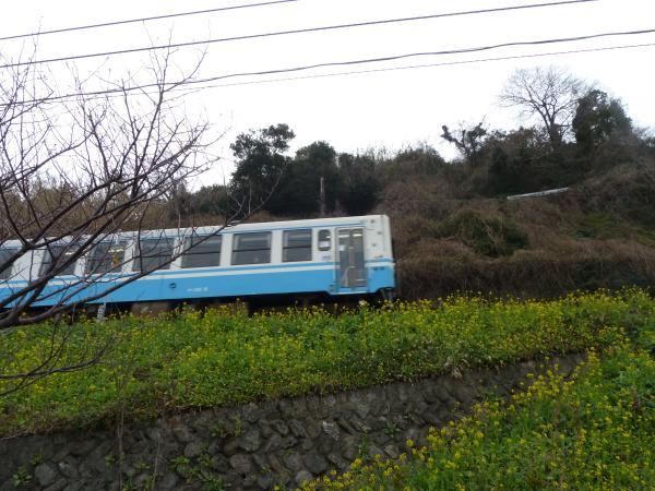 菜の花と電車4