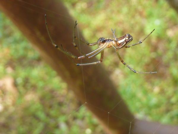 蜘蛛アップ4