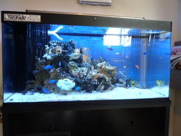 熱帯魚水槽2