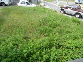 雑草刈前上2