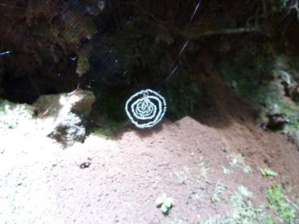 蜘蛛の巣4