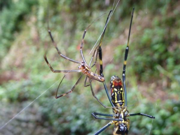 大蜘蛛小蜘蛛5