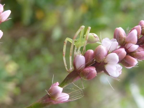 花と蜘蛛4