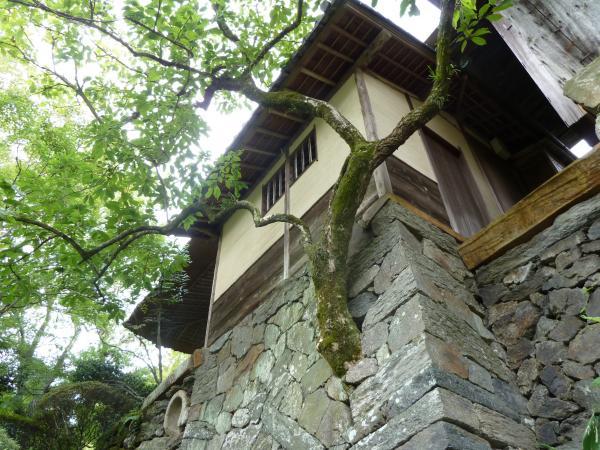 外観石垣から木2