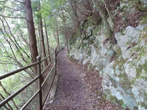 狭い林道2