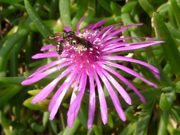 花にアブ1