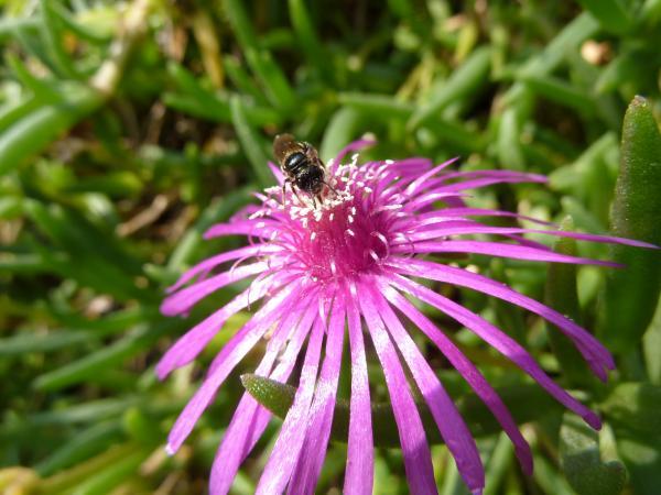 花にアブ3