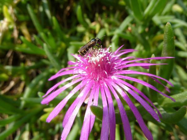 花にアブ2