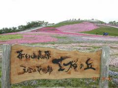 6.9芝桜 012