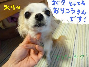 P1000388_convert_20110428000127.jpg