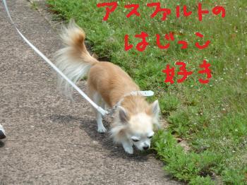 P1000891_convert_20110524090528.jpg