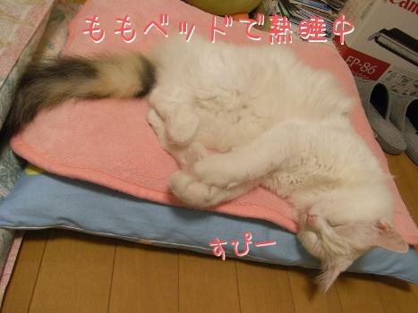 ネコ団子5