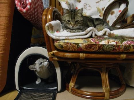 ネコ団子2