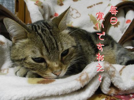 ネコ団子1