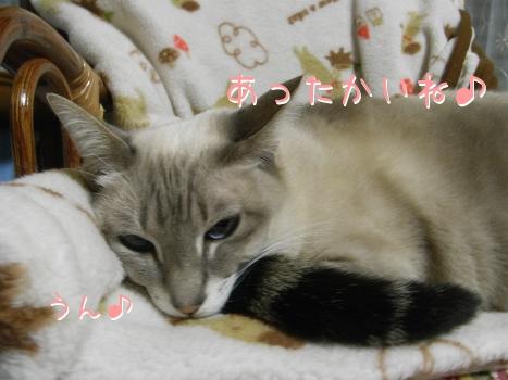 ネコ団子4