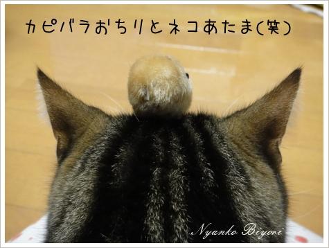 カピバラさんとぼく6