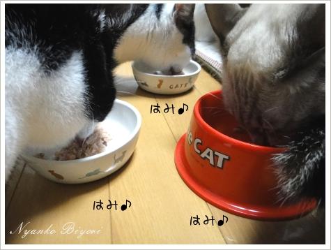 2011年初猫缶祭り5