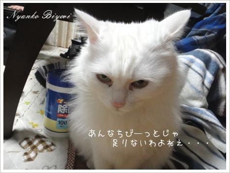 2011年初猫缶祭り11