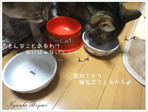 2011年初猫缶祭り10