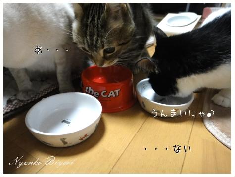2011年初猫缶祭り9