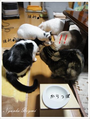 2011年初猫缶祭り8