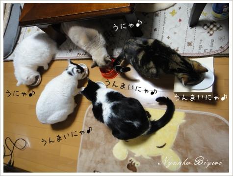 2011年初猫缶祭り7