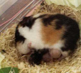 トリ子&baby