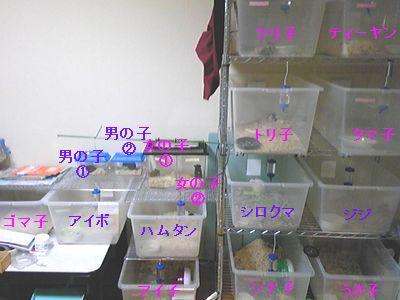 ハムアパート09_11_03