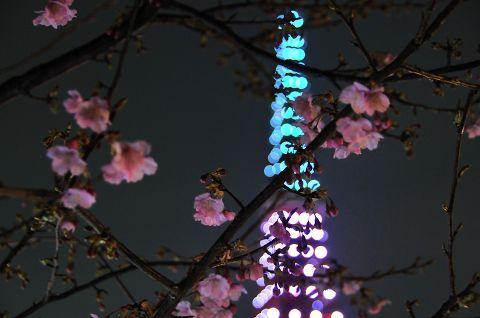寒桜と東京タワー