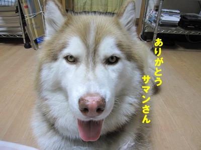 IMG_2531お礼