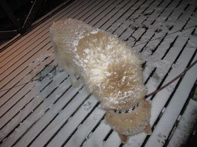 IMG_3181雪