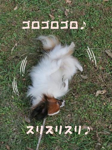 20091015_7850.jpg
