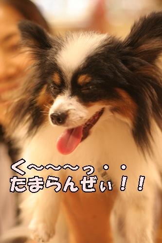 20091017_8088.jpg