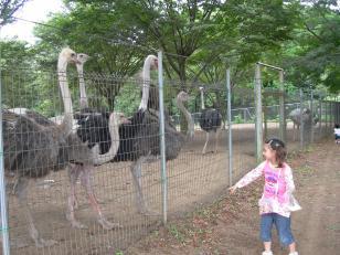 japon201103