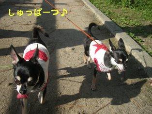 お散歩pm