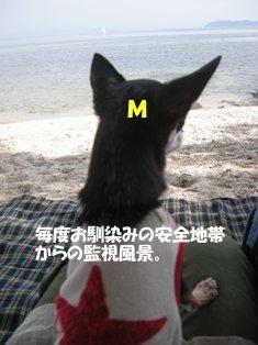 mimi海