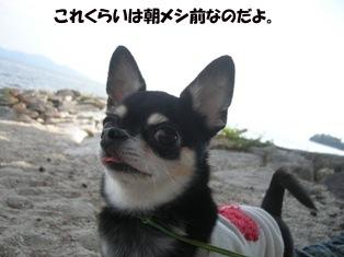 ぴょんペロリ