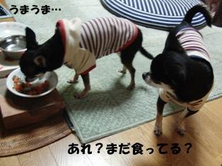 まだ食ってる?