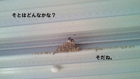 4_20100602210521.jpg