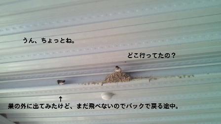 5_20100602210717.jpg