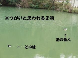 CIMG0931.jpg