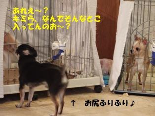 p1_20101215223824.jpg