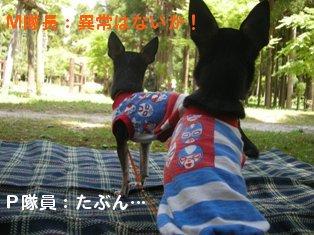 pm_20100516201900.jpg