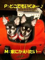 pm_20110916222746.jpg